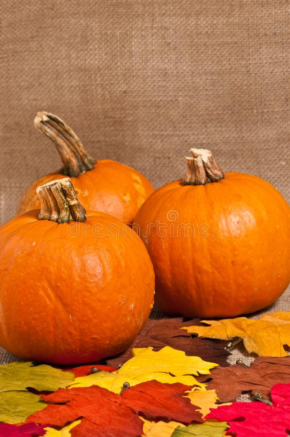Autumn Oktoberfest-Kürbisdekorationen stockfotografie