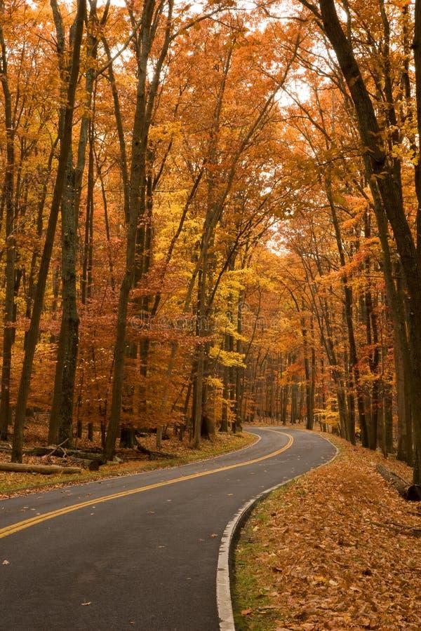 Free Autumn On Two-lane Road Stock Image - 7691961