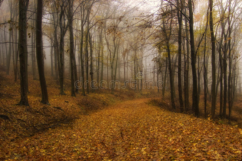Download Autumn In An Orange Forest With Fog Stock Image - Image: 22196513