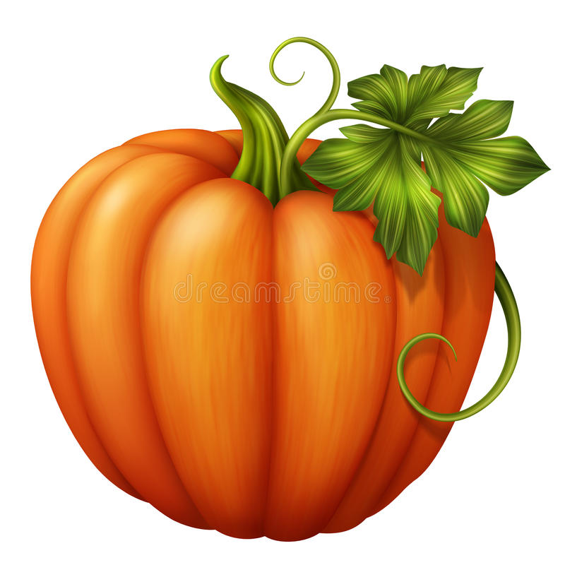 Autumn orange pumpkin with green leaf, clip art illustration isolated on white background stock illustration