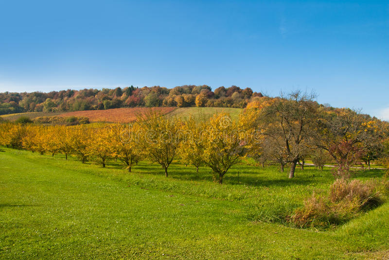 Download Autumn Orchard, Europe Royalty Free Stock Images - Image: 19771999