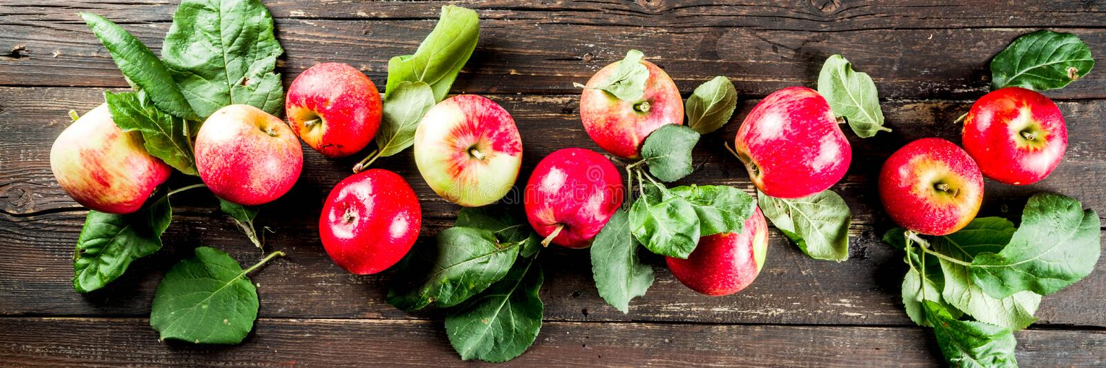 Autumn organic raw apples, with leaves stock image