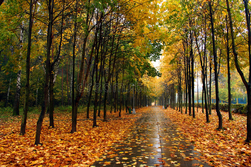 Download Autumn in our park. stock photo. Image of autumn, walk - 2213140