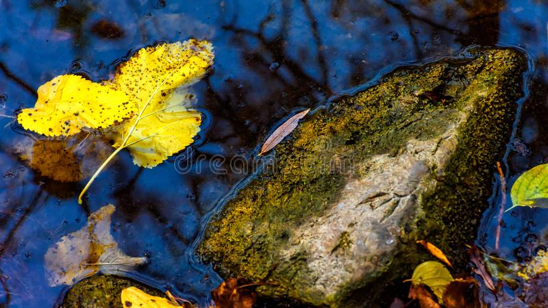 Leaves in water. Autumn is almost over here in North-West Bulgaria. On my last trip to my village I stopped to a nearby place in order to take some shots. There royalty free stock photography