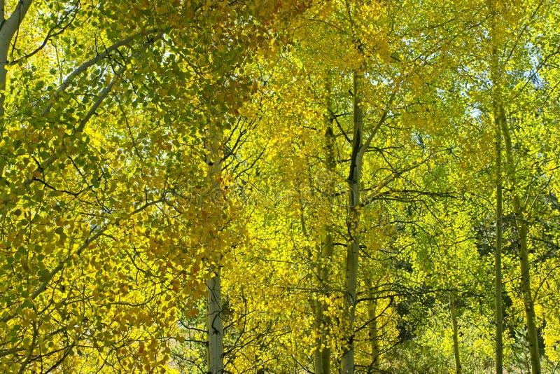 Autumn Palette da natureza imagem de stock