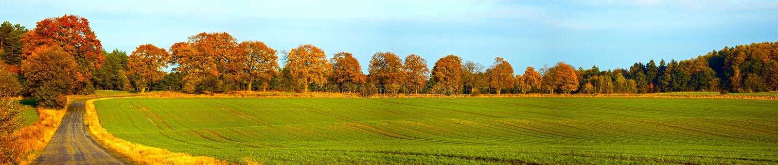 Autumn panorama. With road, field and trees stock images