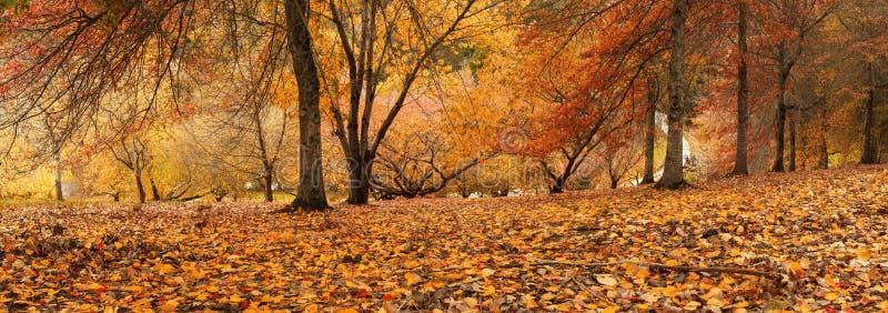 Autumn Panorama images stock