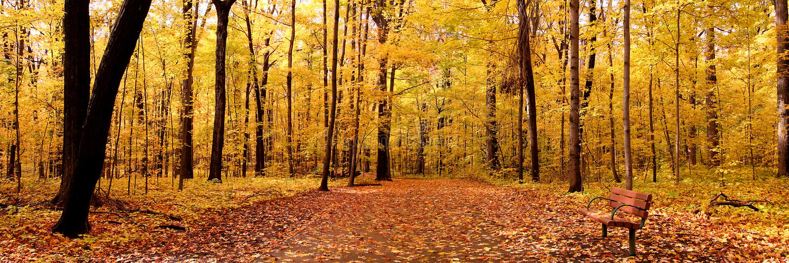 Autumn Panorama. Panoramic view of bright yellow colored autumn trees in a Michigan state park stock photo