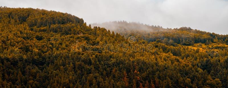 Autumn panoramic landscape of a hill forest in Moieciu de Jos, Brasov, Transylvania, Romania.  royalty free stock photo