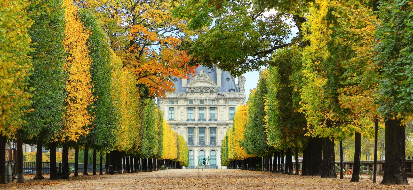 Autumn in Paris. Avenue of trees in autumn leading to the Musee du Louvre in Paris France royalty free stock image