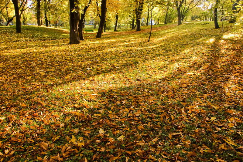 Download Autumn in park stock image. Image of wood, serene, shadows - 10548799