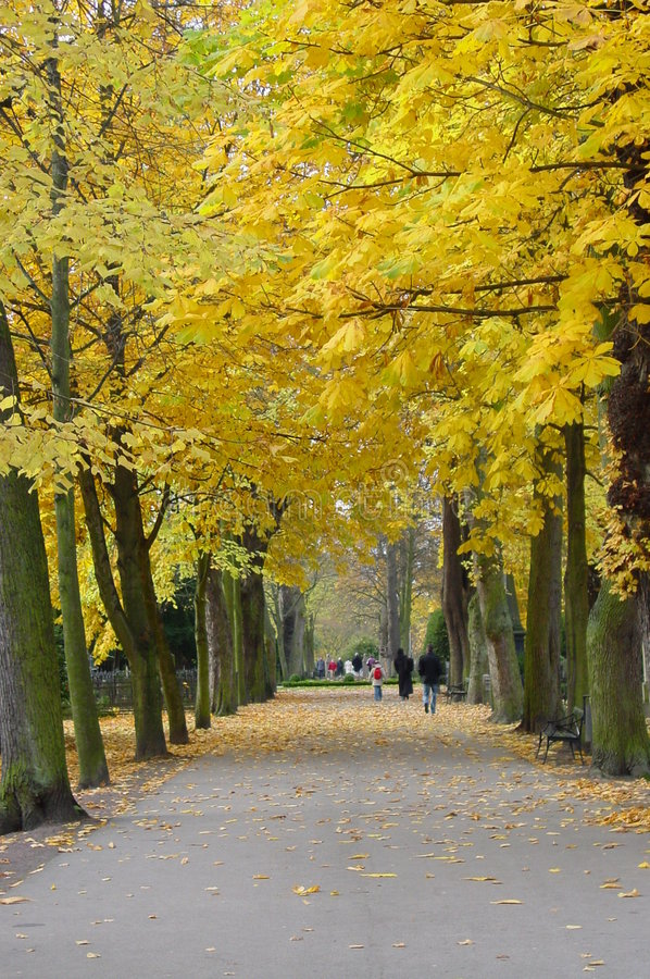 Autumn in the park stock photos