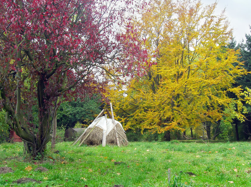 Download Autumn park 12 stock image. Image of lviv, brown, relax - 1425749