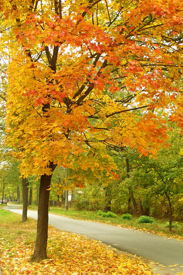 Download Autumn in the park stock image. Image of outdoors, nature - 12287305