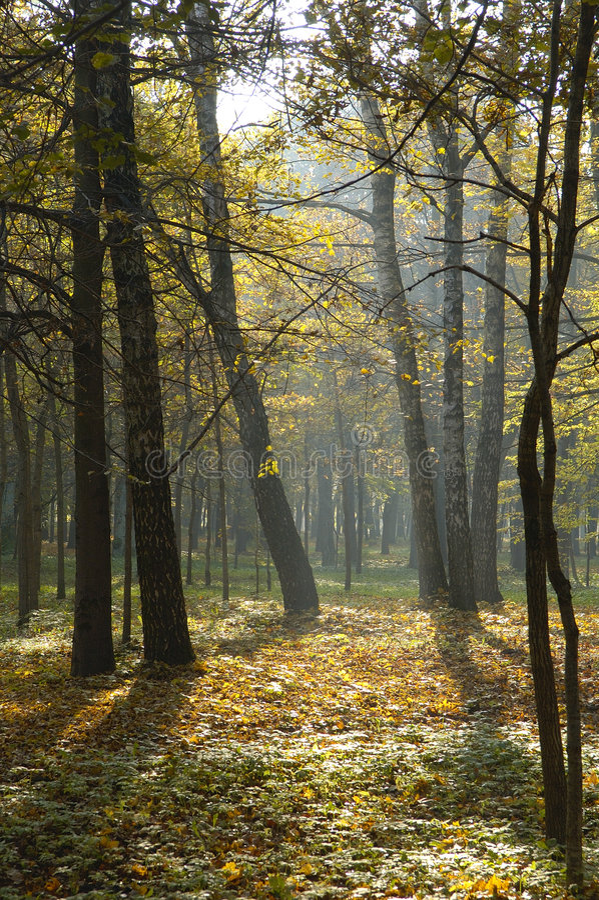 Download Autumn Park Royalty Free Stock Photos - Image: 1409018