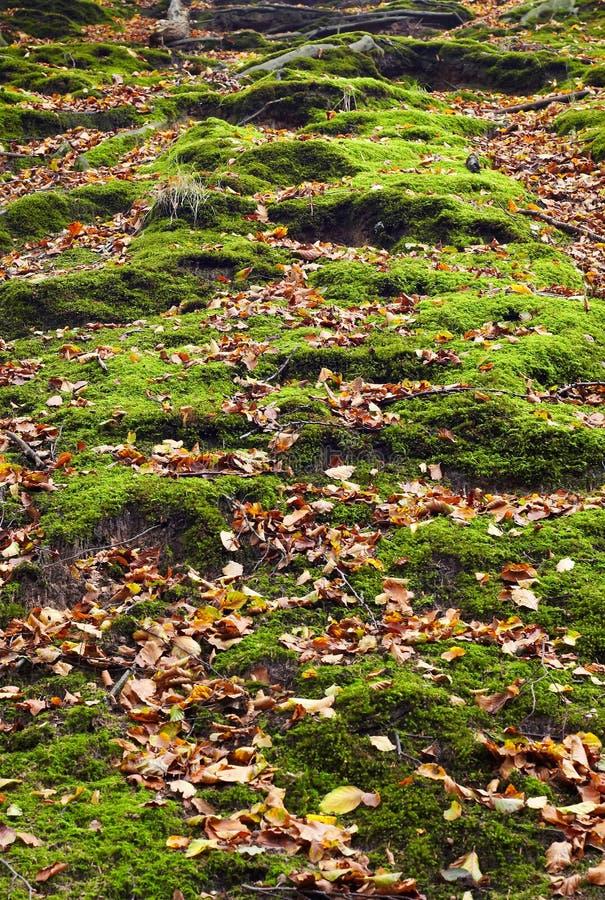 autumn park obraz royalty free
