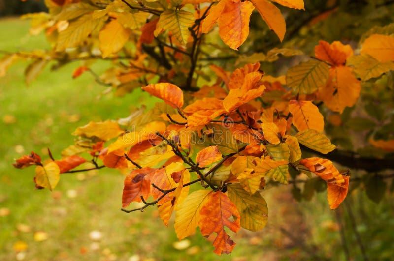 autumn park zdjęcie stock