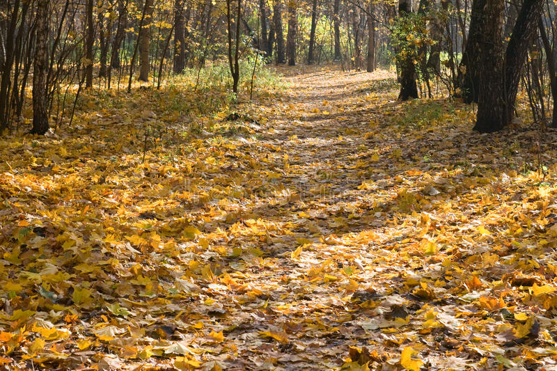 Download Autumn park stock image. Image of landscape, serene, nobody - 14850655