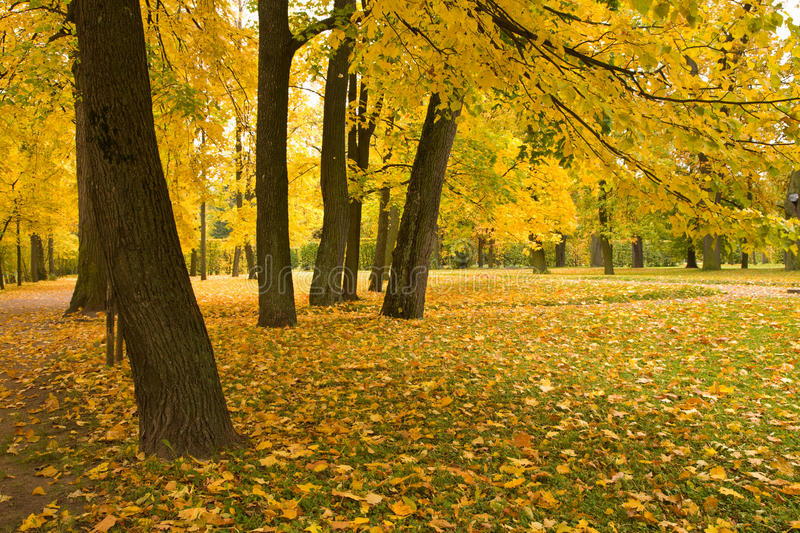 Download Autumn park stock image. Image of meadow, maple, background - 15453669