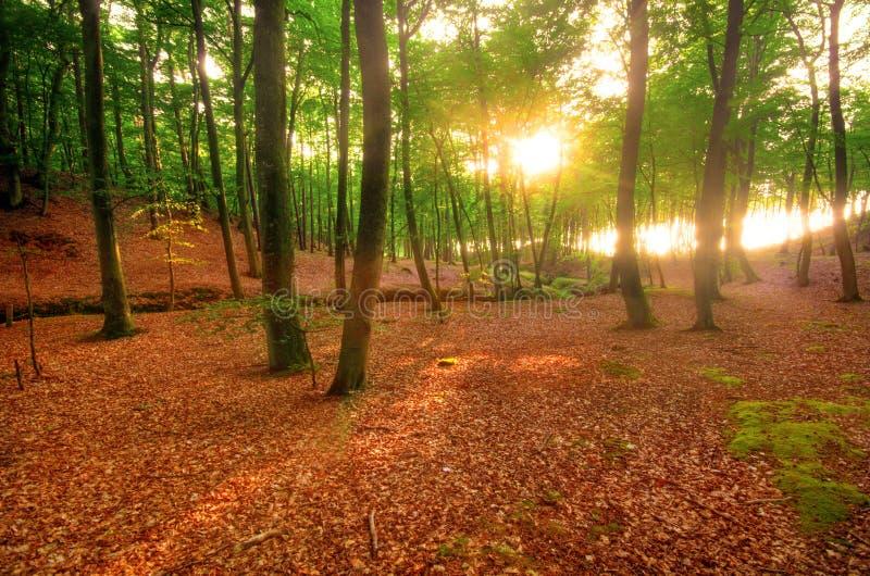 Download Autumn Park Stock Image - Image: 16136221