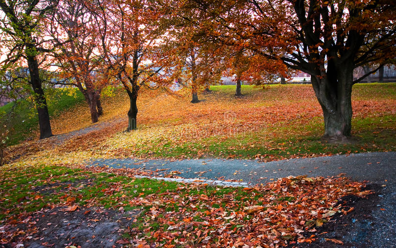Autumn park. Beautiful autumn park with paths stock images
