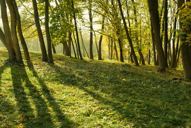 Download Autumn park stock image. Image of environment, leaves - 20132315