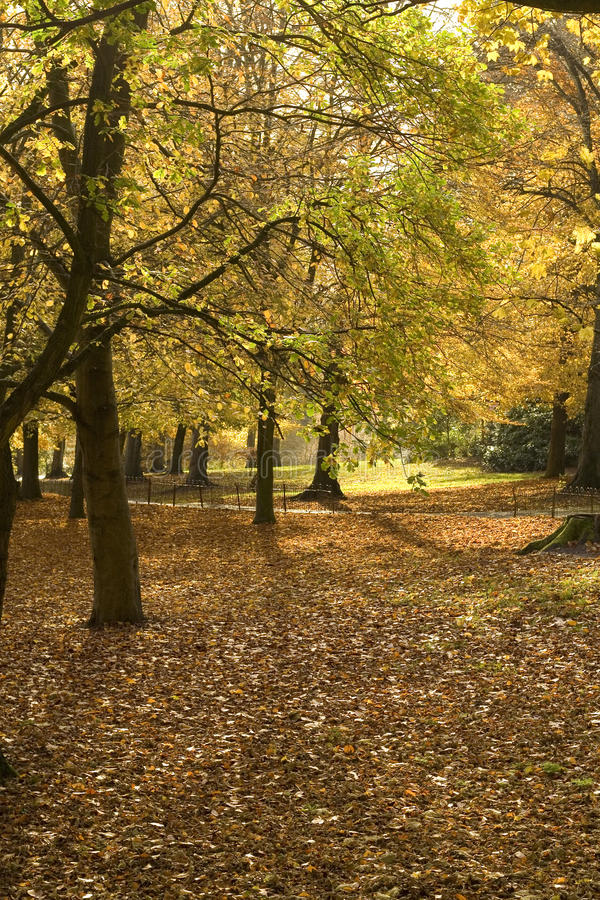 Download Autumn in the park stock image. Image of view, fall, green - 21087933