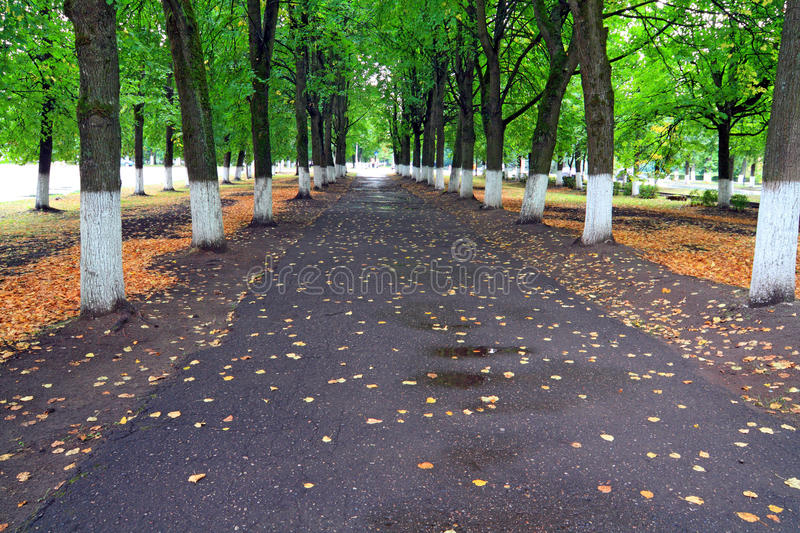 Download Autumn park stock image. Image of park, october, gold - 21666729
