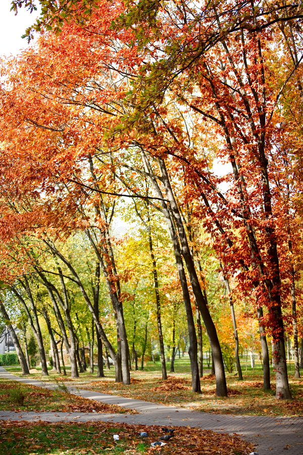 Download Autumn park stock photo. Image of gold, weather, scene - 25584760