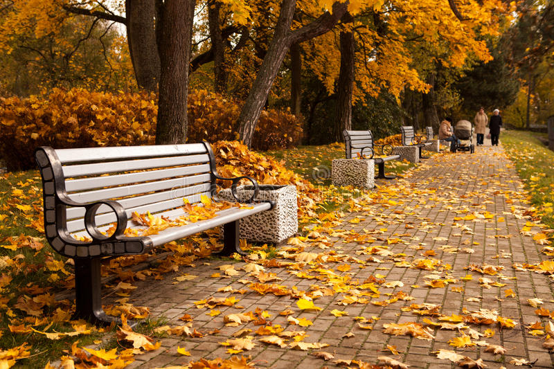 Download Autumn park stock photo. Image of wooden, beautiful, golden - 27290048