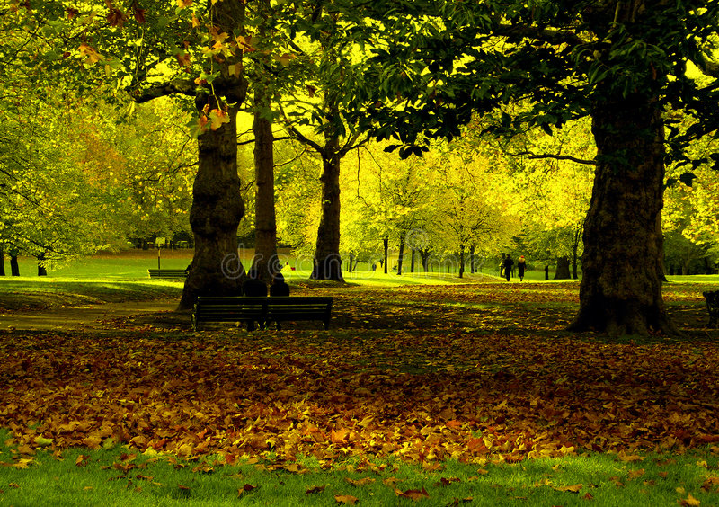 autumn park obrazy stock