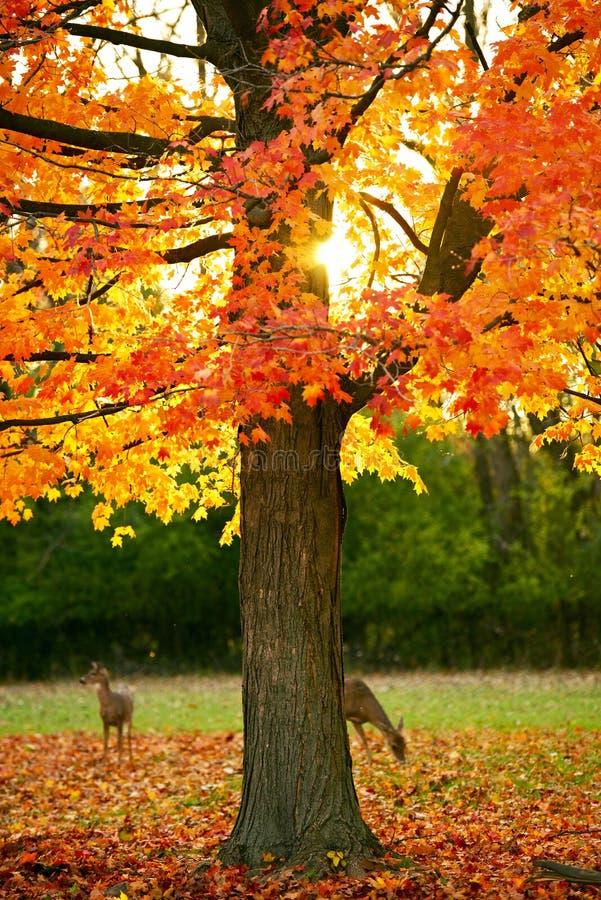Autumn Park lizenzfreie stockbilder