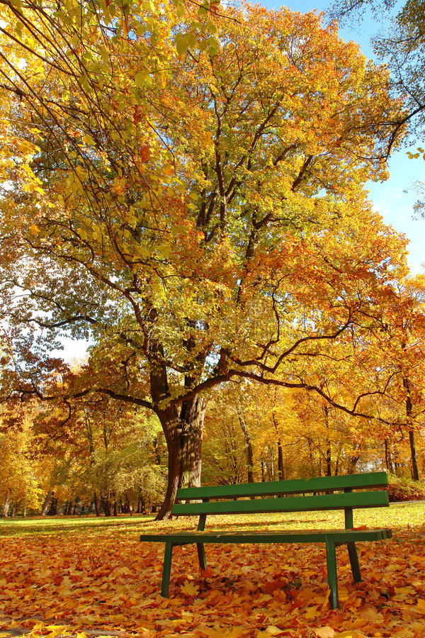 Download Autumn In The Park Royalty Free Stock Image - Image: 3697176