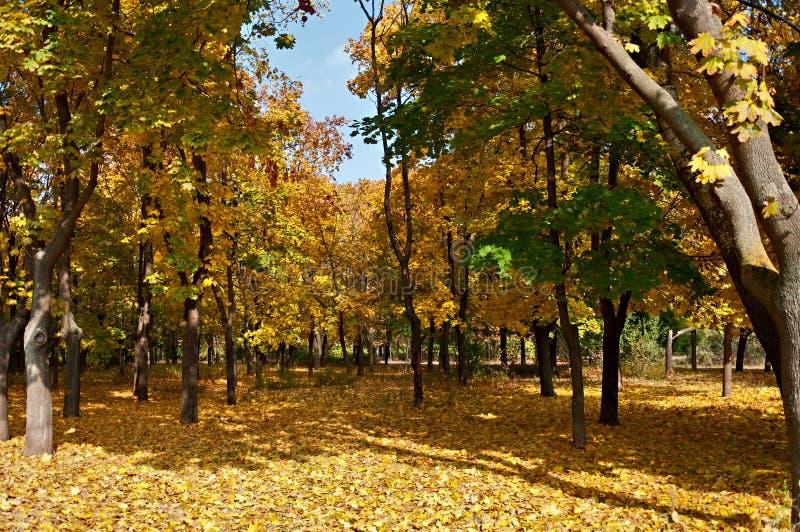 Autumn Park foto de stock royalty free