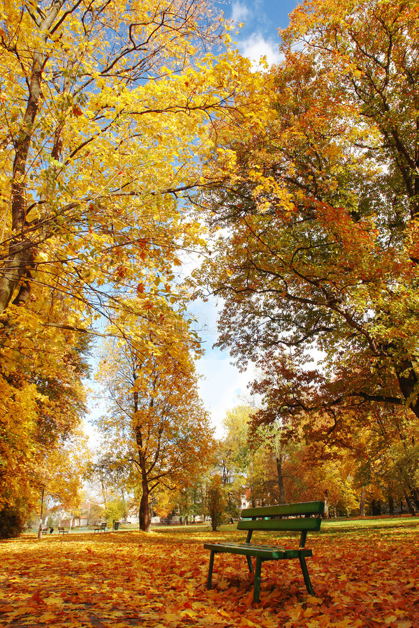 Download Autumn in the park stock photo. Image of ground, crown - 4287848