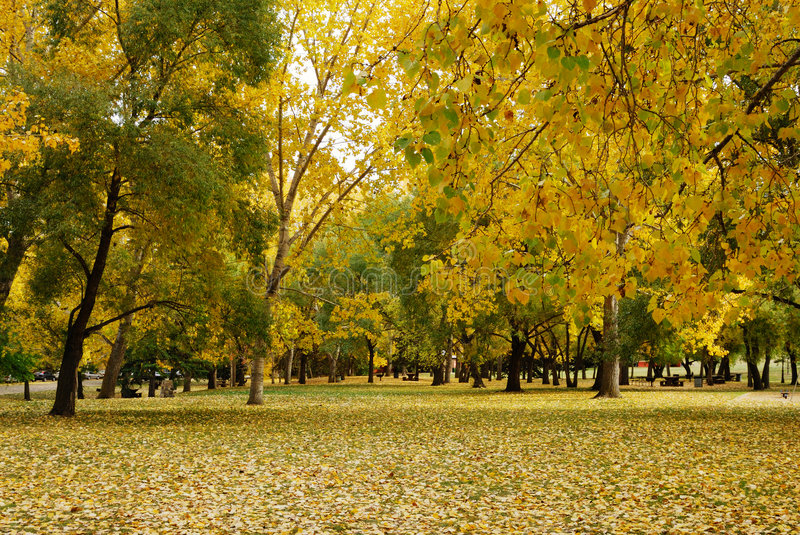 autumn park obrazy royalty free