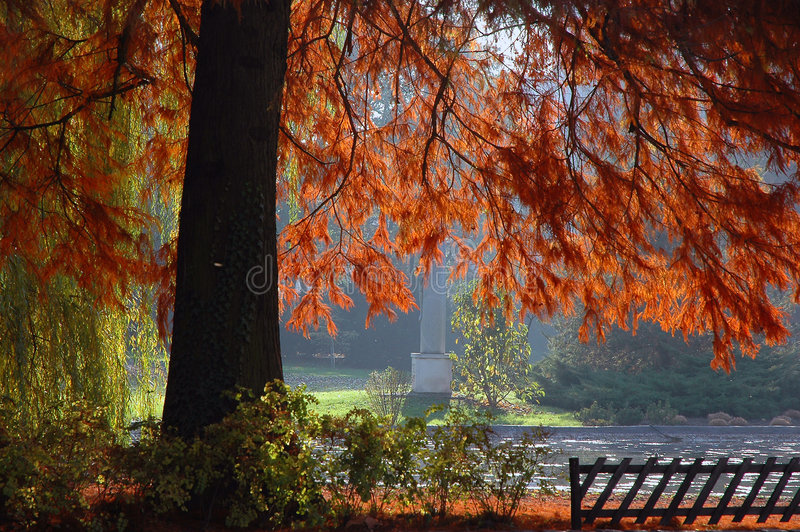 Autumn in park. With many colors on wood stock photo