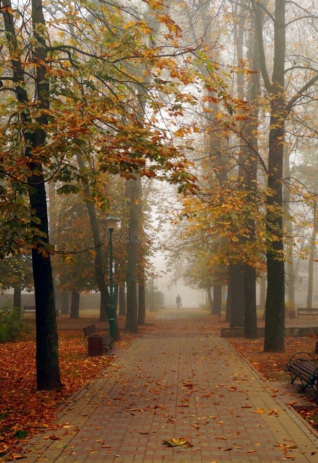 Autumn park alley in dense fog stock image