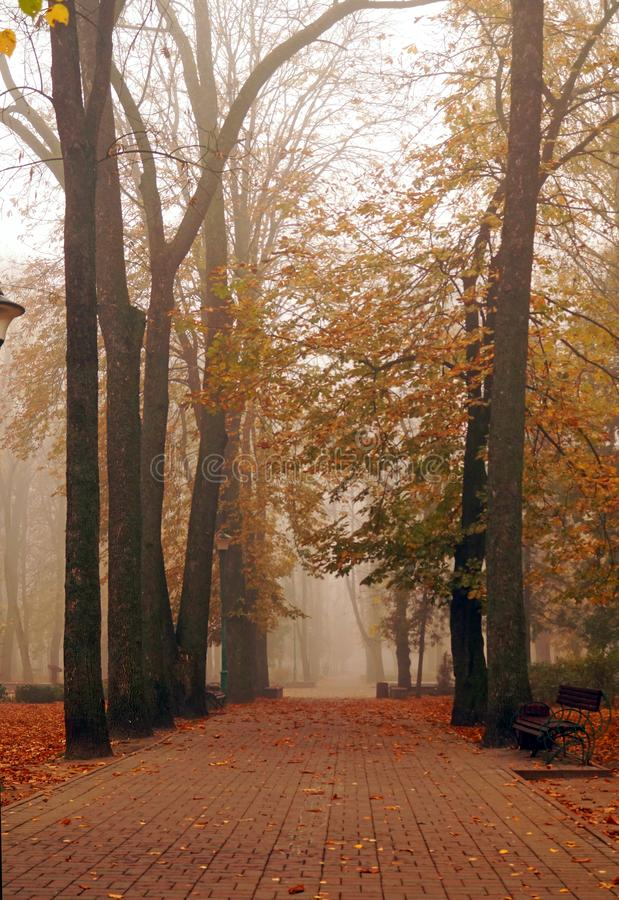 Autumn park alley in dense fog royalty free stock image
