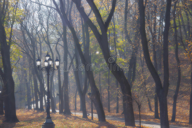 Autumn in the park royalty free stock image