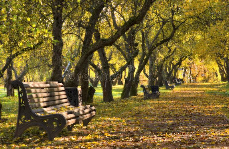 Autumn park. Alley, trees, empty benches and yellow fallen leaves. Indian summer royalty free stock images