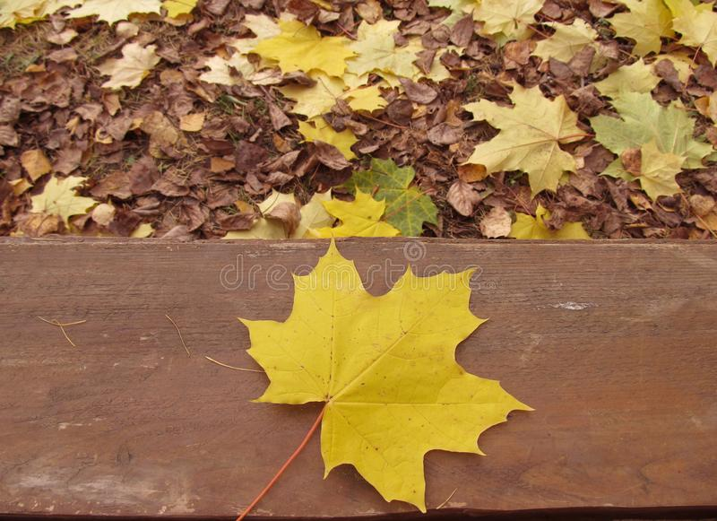Autumn in the Park, background. Yellow leaf stock photo