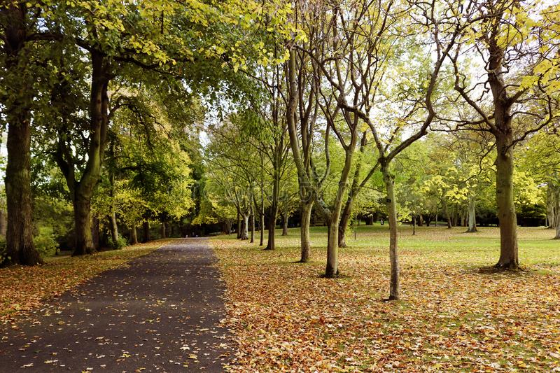 Autumn in the park, stock photo