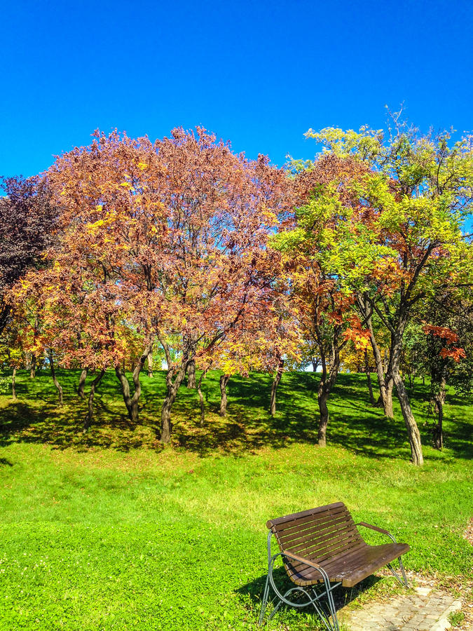 Autumn park and bench royalty free stock photography