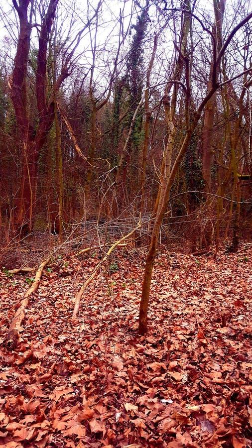 Autumn. Park autumn brussel royalty free stock photo