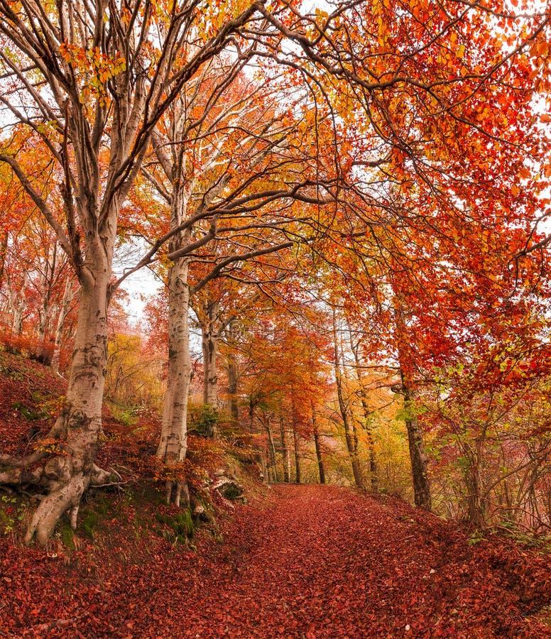 Autumn in the park of Campo dei Fiori, Varese stock image