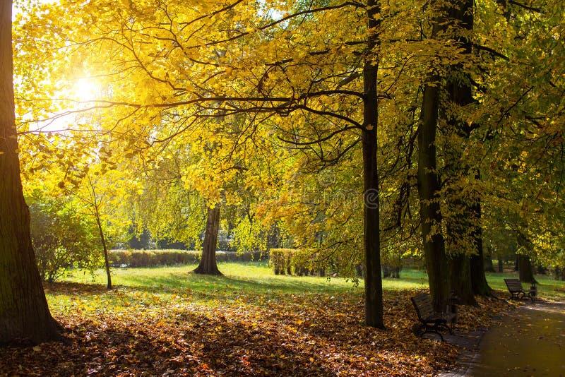 Autumn Park con giallo lascia nei raggi del sole nave fotografia stock libera da diritti
