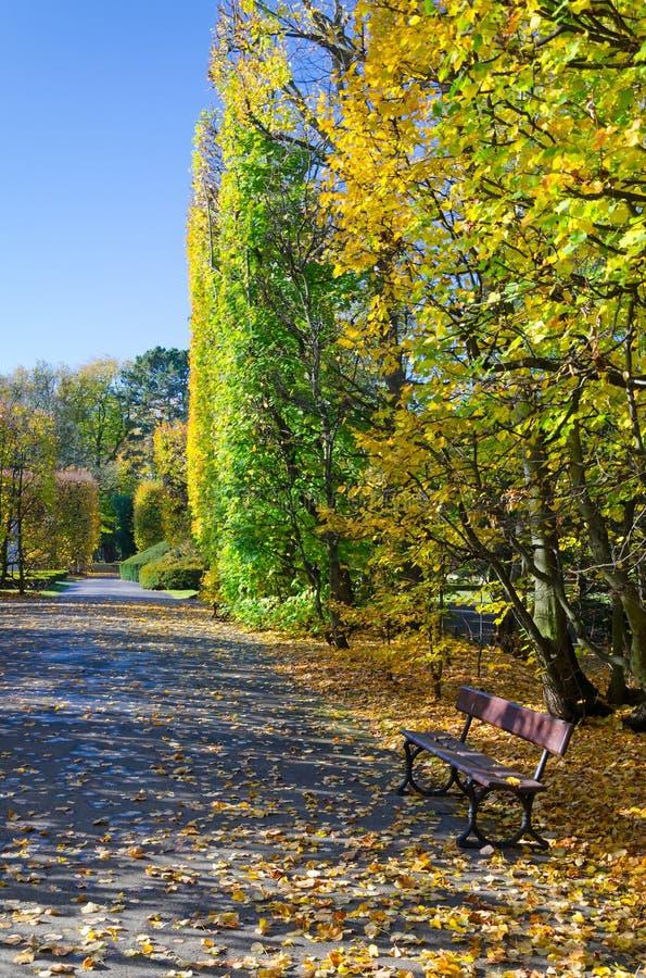 Autumn park details