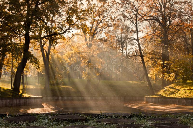 Autumn in the park. Early morning fog, sunshine. Yellow trees. In the foreground grass with frost stock photo