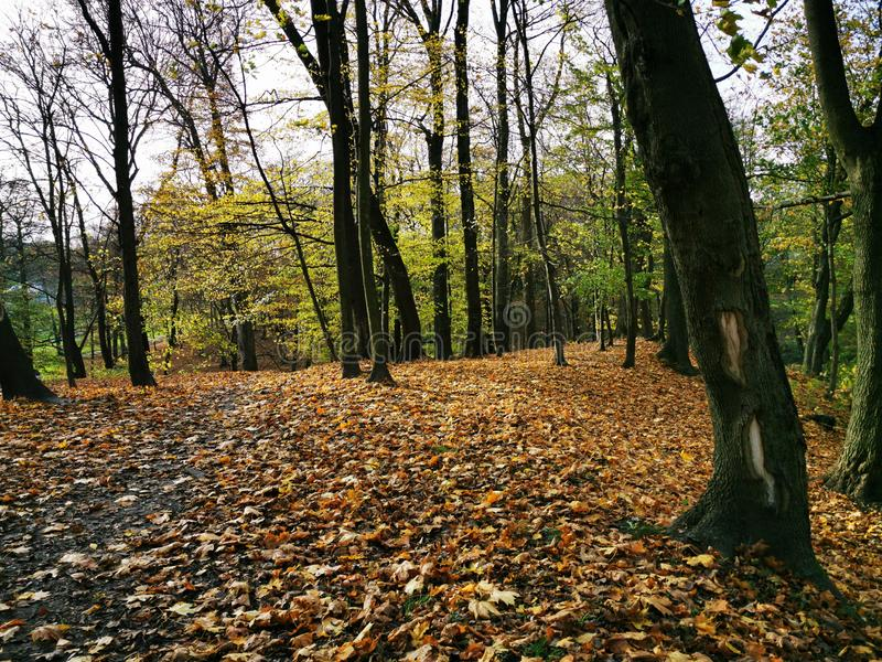 Autumn park. Fall forest road landscape. Autumn, fall season. Sunny day. Forest trees royalty free stock photo